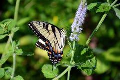 Paradis de papillon Photo libre de droits