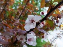 Paradis de pommes Photos libres de droits