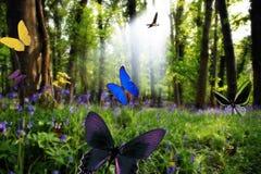 Paradis i natur Royaltyfria Bilder