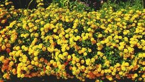 Paradis jaune Image stock