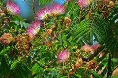 Paradis rose Images libres de droits