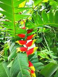 paradis tenerife för fågelkanariefågelö royaltyfri fotografi