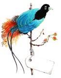 paradis tenerife för fågelkanariefågelö Arkivbild
