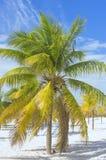 Paradis terrestre, palmiers le soleil et sable près de la mer Photo stock
