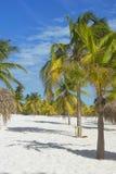 Paradis terrestre, palmiers le soleil et sable près de la mer Photographie stock