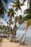 Paradis tropical   photo libre de droits