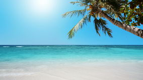 Paradis tropical banque de vidéos