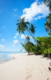 Paradis tropical Image stock
