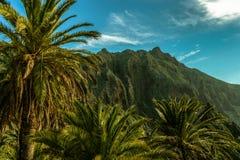 Paradis tropical avec des palmiers en île tropicale images stock