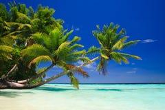Paradis tropical chez les Maldives Image libre de droits