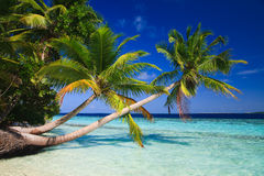 Paradis tropical chez les Maldives Images libres de droits