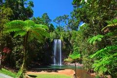 Paradis tropical de forêt tropicale de cascade à écriture ligne par ligne de fougère d'arbre Photographie stock libre de droits