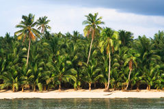 Paradis tropical de palmier Photos stock