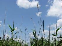 Paradis vert-bleu dans le bara de Carska Images libres de droits