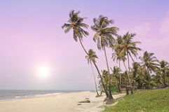 Paradise. In the south of India in the morning Royalty Free Stock Photos