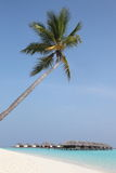Paradise. Beach with palmtree in the maldives Stock Photos