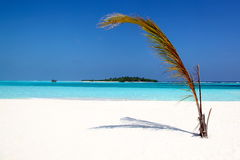 Paradise. Beach with palmtree on the beach Stock Photos