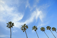 Paradise. Palm trees and beautiful cloudy sky Royalty Free Stock Photos