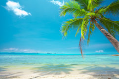 Paradise. View of nice tropical empty sandy beach with some palm stock images