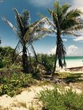 paradise immagini stock libere da diritti
