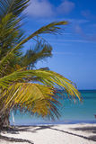 Paradise at bavaro beach in punta cana Royalty Free Stock Image