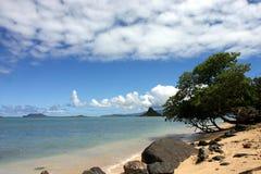 Paradise beach. At oahu hawaii royalty free stock image