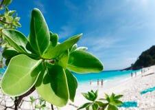 Paradise beach. Stock Photo