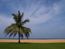 Paradise beach. Lone palm tree in the beach of a luxury resort Royalty Free Stock Photo