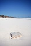 Paradise beach. With square stone Stock Photography