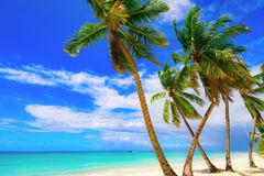 Paradise beach beautiful white sand with palm tree in the resort. Paradise beach beautiful white sand with palm tree on a blue sky background with white clouds Stock Images