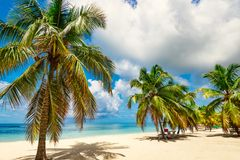 Paradise beach beautiful white sand with palm tree in the resort. Paradise beach beautiful white sand with palm tree on a blue sky background with white clouds Royalty Free Stock Images