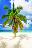 Paradise beach beautiful white sand with palm tree in the resort. Paradise beach beautiful white sand with palm tree on a blue sky background with white clouds Royalty Free Stock Image