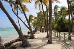 Paradise beach in Carribean. Carribean beach, palmtrees and sunshine Stock Photo