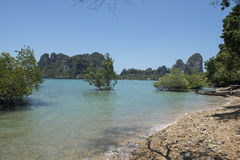 Paradise beach with clear water. Ton Sai, Thailand. Paradise beach with clear water, jungle and karst rocks in Ton Sai, Thailand Royalty Free Stock Photos