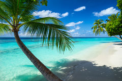 Paradise beach. Coco palms on paradise beach royalty free stock photo