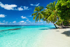 Paradise beach Royalty Free Stock Image