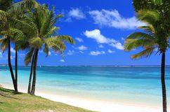 Paradise beach in mauritius island. Wonderful beach with palm trees in tropical island Stock Images
