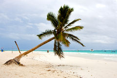 Paradise beach in mexico. Palm in the  blue lagoon relax and boat Royalty Free Stock Photography
