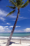 Paradise beach palm. A palm tree against paradise beach background royalty free stock photo