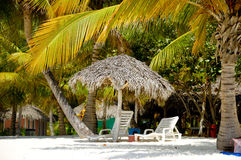 Paradise beach with palms and sunbeds Royalty Free Stock Images