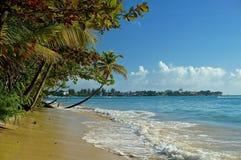 Paradise beach palmtree Stock Photography