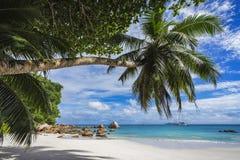 Paradise beach on the seychelles 21 Royalty Free Stock Photo
