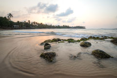 Paradise beach of Sri Lanka at sunrise. Tropical paradise beach with ocean and palm trees at sunrise in Mirissa, Sri Lanka Royalty Free Stock Image