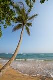 Paradise beach of Sri Lanka. Tropical paradise beach with ocean and palm trees in Mirissa, Sri Lanka Royalty Free Stock Photography