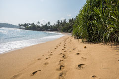 Paradise beach of Sri Lanka. Tropical paradise beach with ocean and palm trees in Mirissa, Sri Lanka Stock Photo