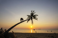 Paradise beach sunset tropical palm trees Royalty Free Stock Photography
