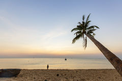 Paradise beach sunset tropical palm trees Royalty Free Stock Images