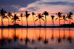 Paradise beach sunset tropical palm trees Stock Photo