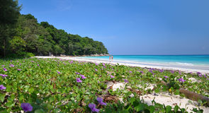 Paradise Beach at Ta chai Island Royalty Free Stock Image