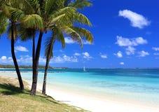 Paradise beach in tropical island. Wonderful beach with palm trees in tropical island Stock Photo